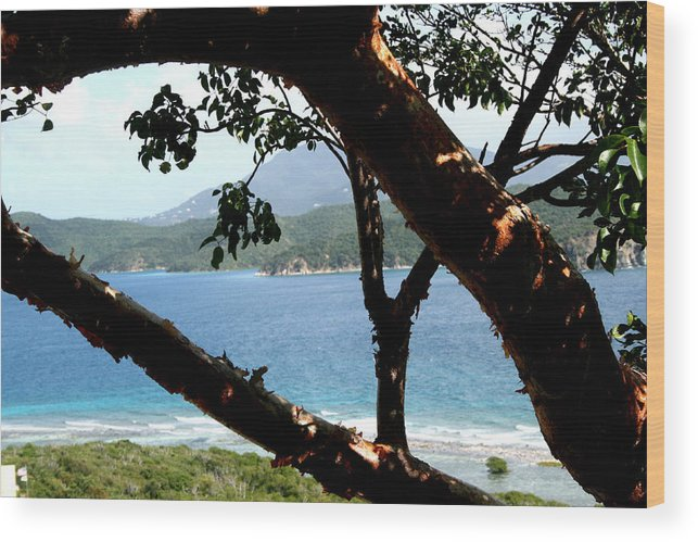 Trees Wood Print featuring the photograph Framed Vista by Sharon McLain