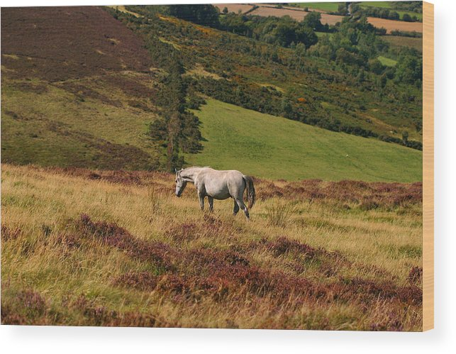 Horse Wood Print featuring the photograph Freedom by Szalonaisa Photography
