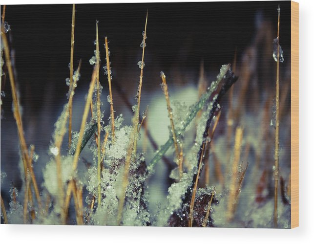 Snow Wood Print featuring the photograph Fresh Snow by Melissa Leda