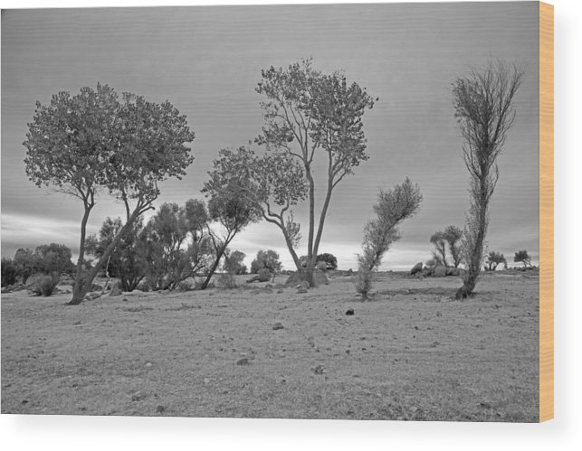 Folsom Lake Wood Print featuring the photograph From Bellow by Joe Fernandez