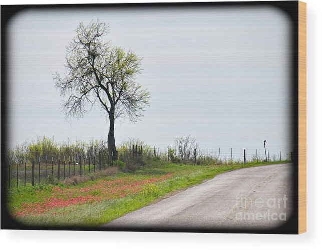 Roadside Wood Print featuring the photograph Fugacious by Gary Richards