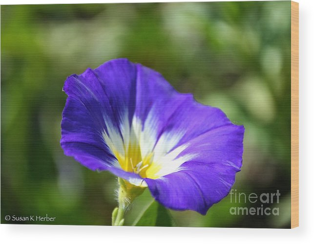 Flower Wood Print featuring the photograph Funneling Sunshine by Susan Herber