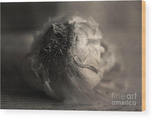 Garlic Wood Print featuring the photograph Garlic by Elena Nosyreva