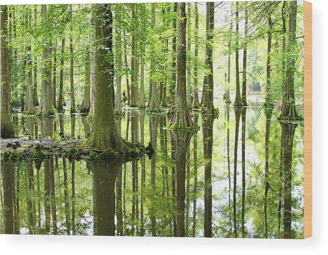 Bald Cypress Trees Wood Print featuring the photograph Go Green by David Byron Keener