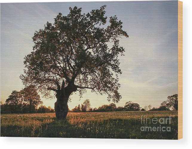 Clare Bambers Wood Print featuring the photograph Goddess Tree 2 by Clare Bambers