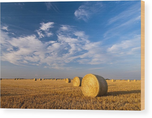 Cut Wheat Field Photograph Wood Print featuring the photograph Golden Brown by Nebojsa Novakovic