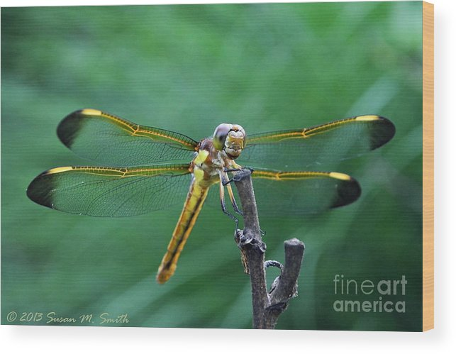 Photography Wood Print featuring the photograph Goldie by Susan Smith