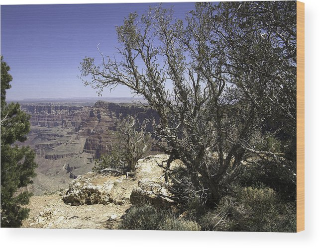 Usa Wood Print featuring the photograph Grand Canyon by Peter Lloyd