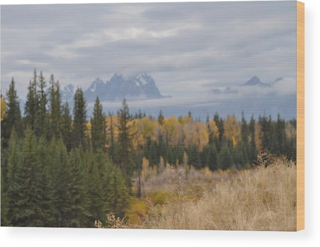 Trees Wood Print featuring the painting Grand Tetons by Teresa Howell
