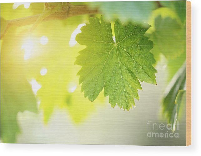 Grape Wood Print featuring the photograph Grapevine Leaves by Konstantin Sutyagin