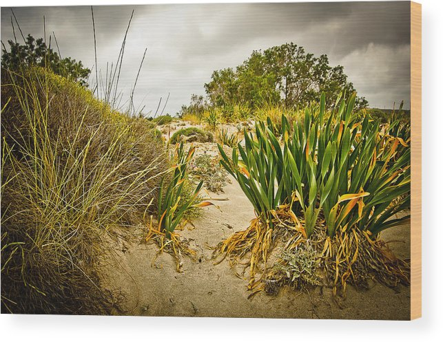 Greece Wood Print featuring the photograph Grass And Sand Of Elafonisi by Oleg Koryagin