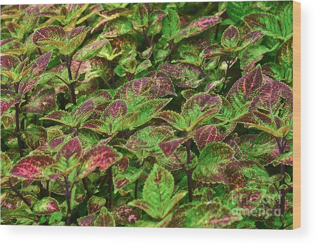 Landscape Wood Print featuring the photograph Green And Purple In Nature by Elvis Vaughn