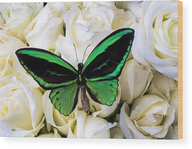 Green Wood Print featuring the photograph Green Butterfly On White Roses by Garry Gay