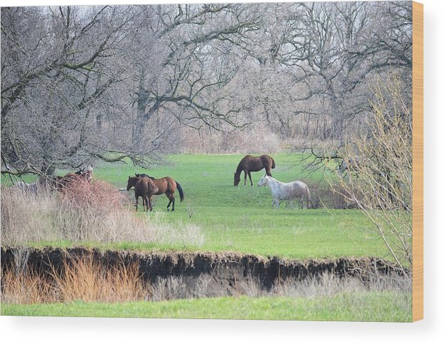 Nature Wood Print featuring the photograph Greener Pastures by Bonfire Photography