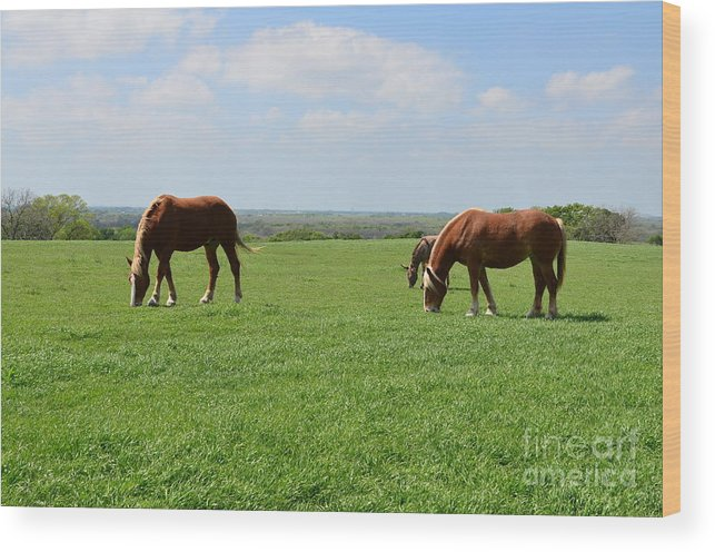 Pastures Wood Print featuring the photograph Greener Pastures by Hilton Barlow