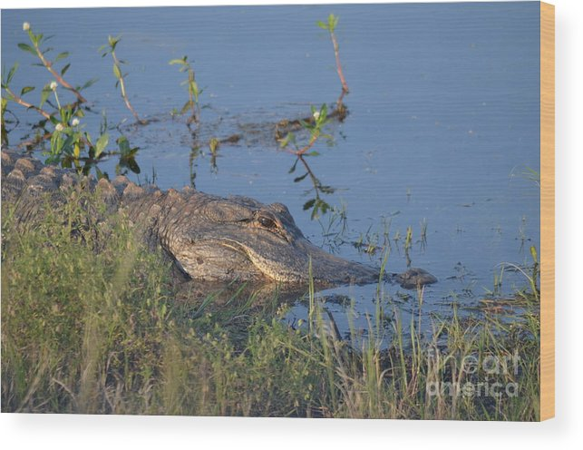 Alligator Wood Print featuring the photograph Guard Your Swamp by Kathy Gibbons