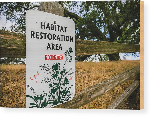 Windsor Wood Print featuring the photograph Habitat Restoration Area Sign In Shiloh by Ron Koeberer