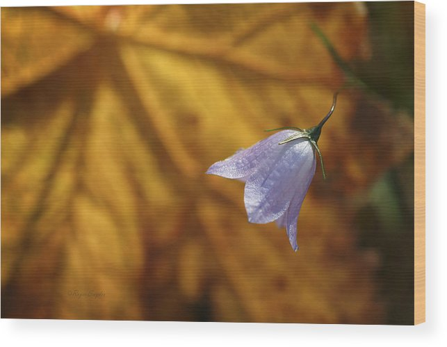 Indigo Wood Print featuring the photograph Hare Bell And Gold Leaf by Roger Snyder