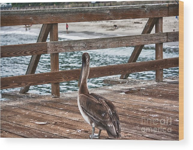 Hdr Wood Print featuring the photograph hd 392 hdr - Pelican On The Pier by Chris Berry