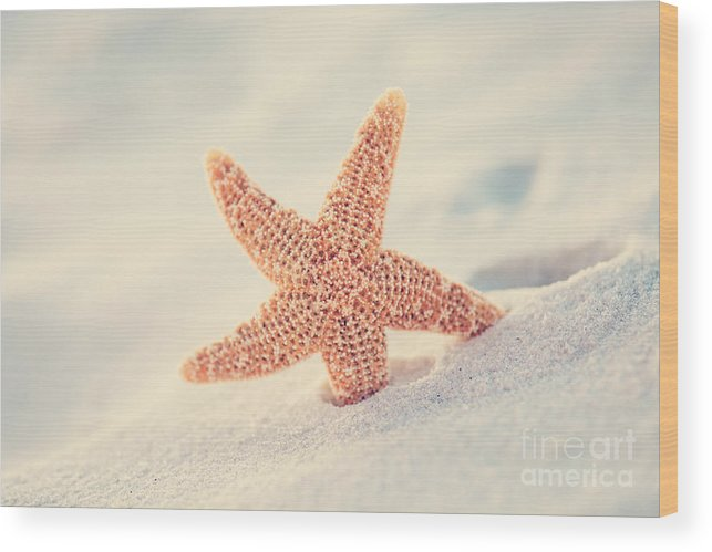 Starfish Wood Print featuring the photograph Hello by Erin Johnson