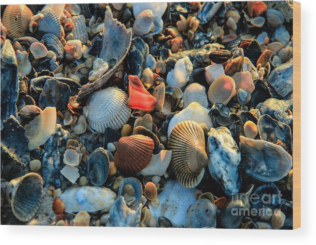 Shells Wood Print featuring the photograph Here A Shell There A Shell by Kathy Szabo