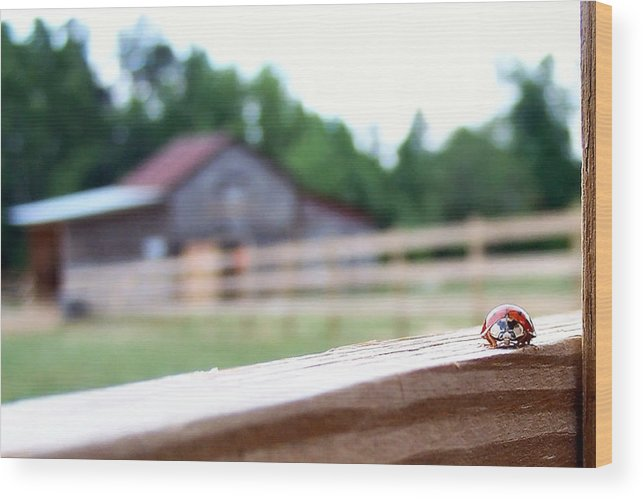 Ladybug Wood Print featuring the photograph Hide And Seek by Nadine Lewis