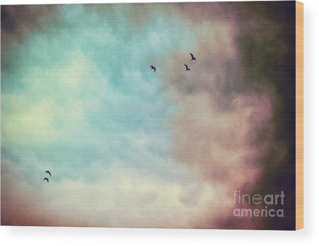 Birds Wood Print featuring the photograph High In The Sky by Silvia Ganora