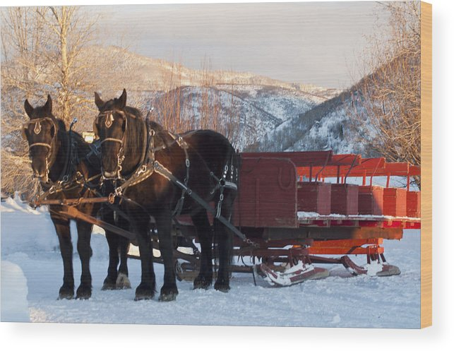 Sleigh Ride Wood Print featuring the digital art Hop On  We Are Ready by Daniel Hebard