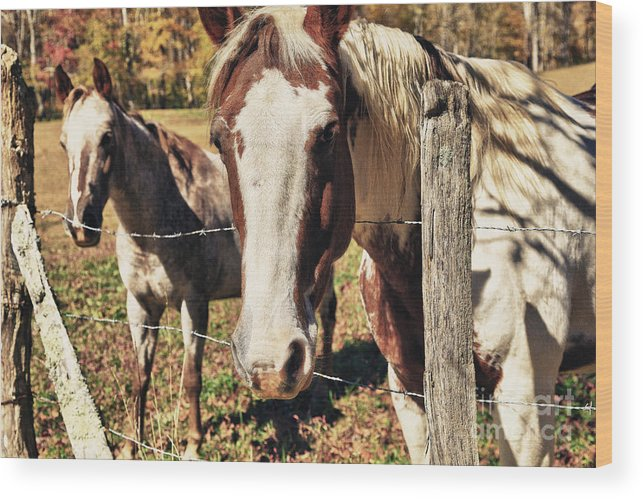 Animals Wood Print featuring the photograph Horses by Jill Lang