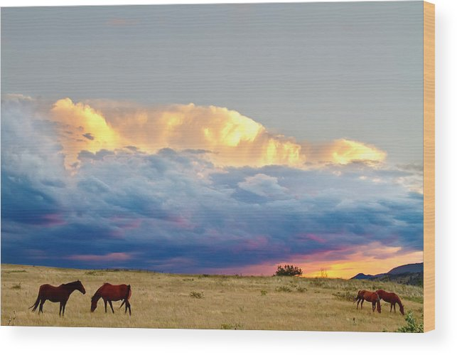 Horses Wood Print featuring the photograph Horses On The Storm by James BO Insogna