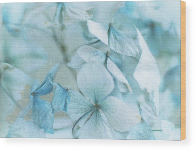 Petal Wood Print featuring the photograph Hydrangea Flowers by Jill Ferry