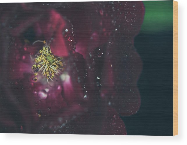 Red Roses Wood Print featuring the photograph I Can Feel Your Heart Beating by Laurie Search