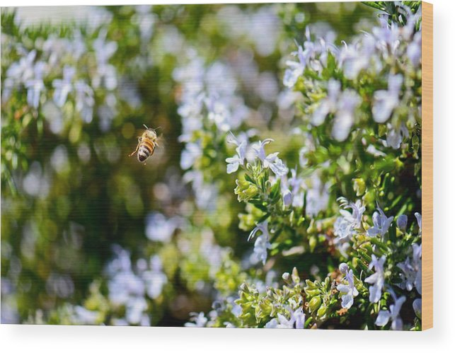 Bee Wood Print featuring the photograph In Flight by Jean-Pierre Mouzon