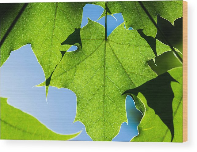 Abstract Wood Print featuring the photograph In The Cooling Shade - Featured 3 by Alexander Senin