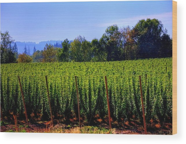 Linn Wood Print featuring the photograph In The Grow 16080 by Jerry Sodorff