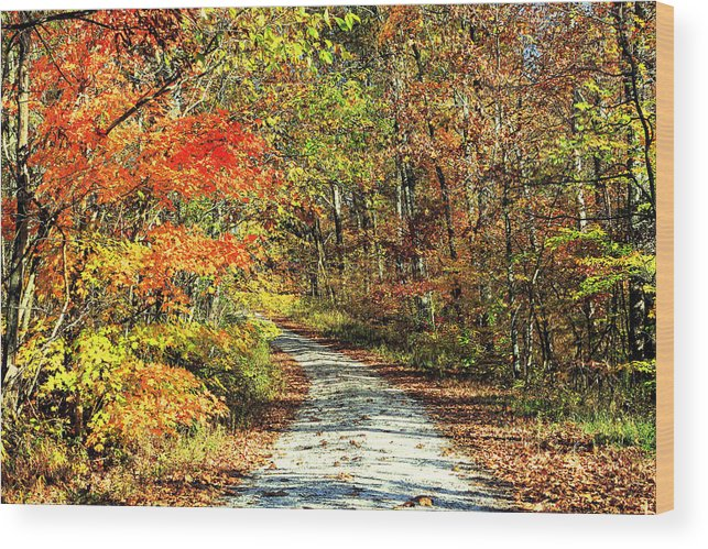 Autumn Wood Print featuring the photograph Indiana Back Road by Lorna R Mills DBA Lorna Rogers Photography
