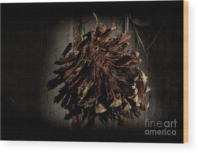 Pine Wood Print featuring the photograph Inner Pine Cone by Charles Majewski