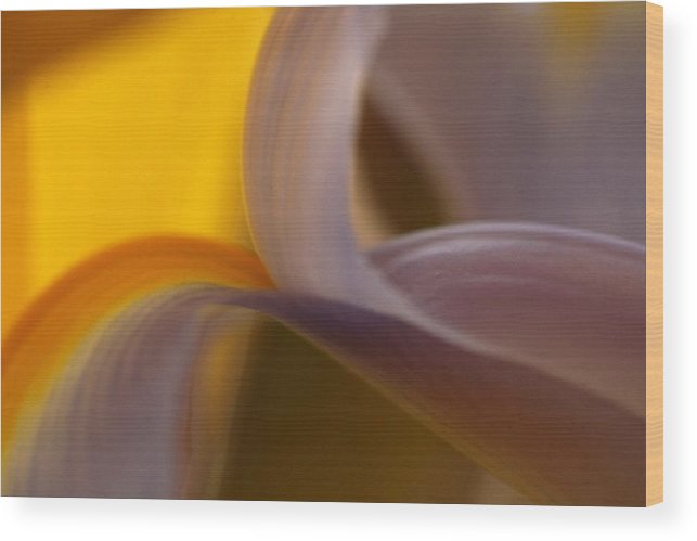Macro Wood Print featuring the photograph Iris by Alicia Haselwood