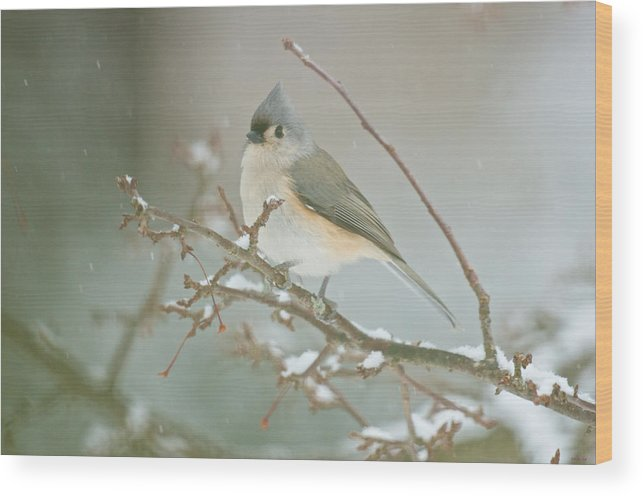 Birds Wood Print featuring the photograph It May Be Cold But I Still Have My Looks by Kristin Hatt