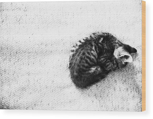 Jezcself Wood Print featuring the photograph It's All Mine by Jez C Self