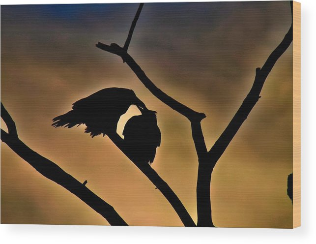 Raven Wood Print featuring the photograph Kissing Ravens by Kevin Spriggs