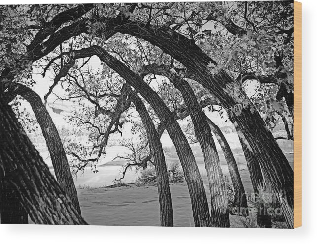 Nm Wood Print featuring the photograph Landscape A10f Nm Co by Otri Park