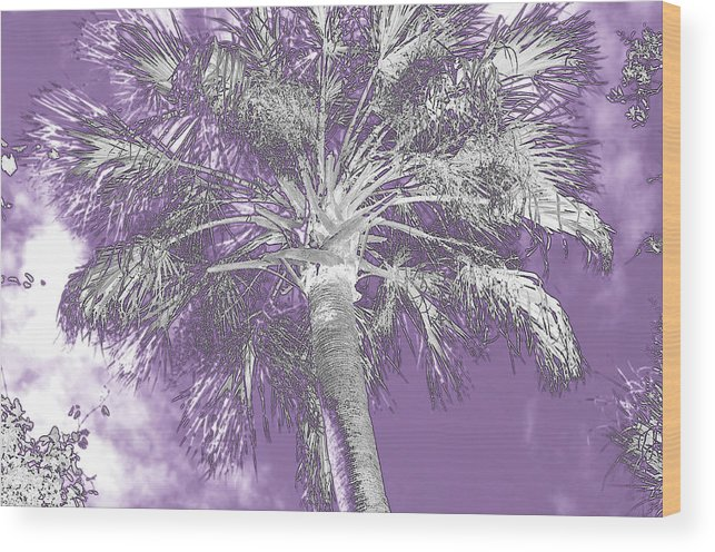 Horizontal Wood Print featuring the photograph Lavender Glow Palm Tree Myakka River State Park Usa by Sally Rockefeller