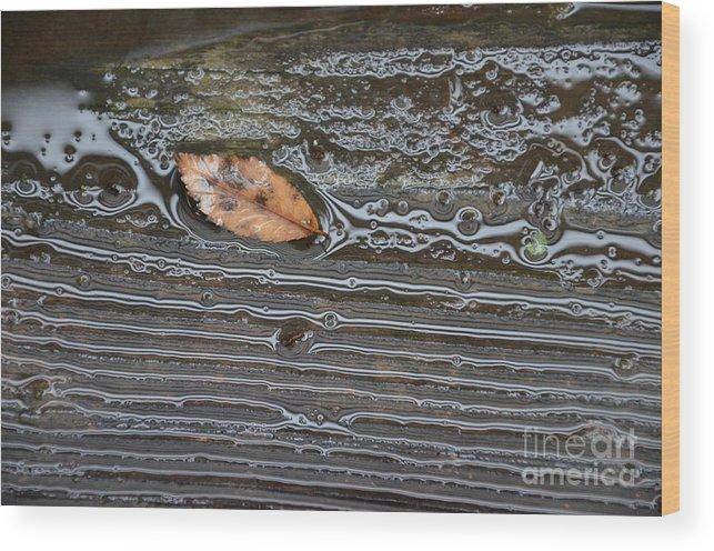 Rain Wood Print featuring the photograph Leaf After Rain by Charles Majewski