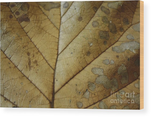 Tropical Wood Print featuring the photograph abstract Leaf by Arelys Jimenez