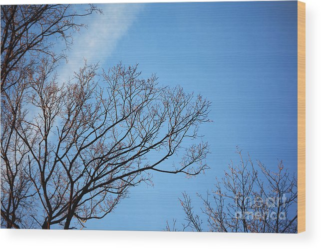 Tree Wood Print featuring the photograph Leafless Tree by Konstantin Sutyagin