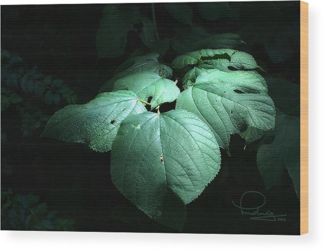 Photography Wood Print featuring the photograph Leaves In A Patch Of Sunlight by Ludwig Keck