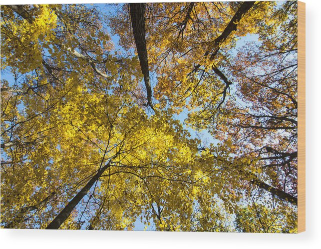 Autumn Wood Print featuring the photograph Leaves In The Sky by Gej Jones