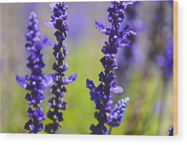 Lilac Wood Print featuring the photograph Lilac Heaven by Jean-Pierre Mouzon