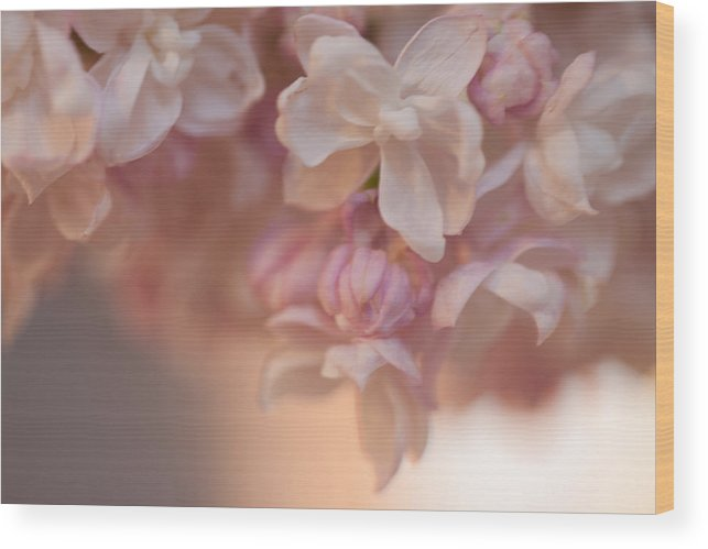 Flora Wood Print featuring the photograph Lilacs by Wendy A Rosier